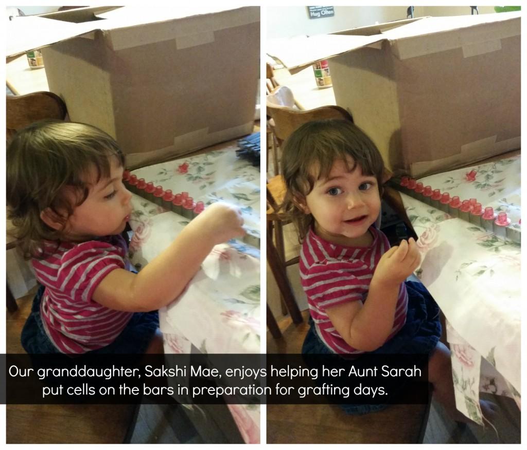 Sakshi working