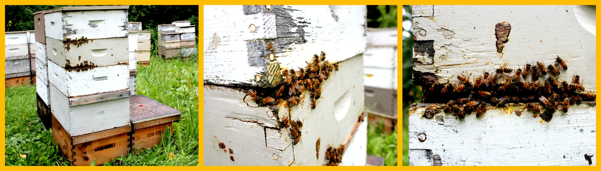 bee-yard-Collage